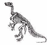 dollo_iguanodon