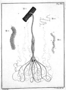 trembey hydra