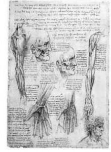 vinci_anatomie_l